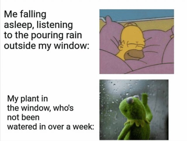 Plant Memes (21 pics)