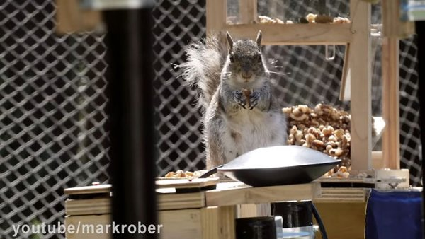 This Guy Built An Attraction For Squirrels (31 pics)