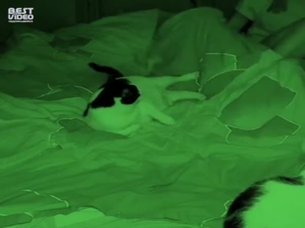 What Cats Do When You Sleep