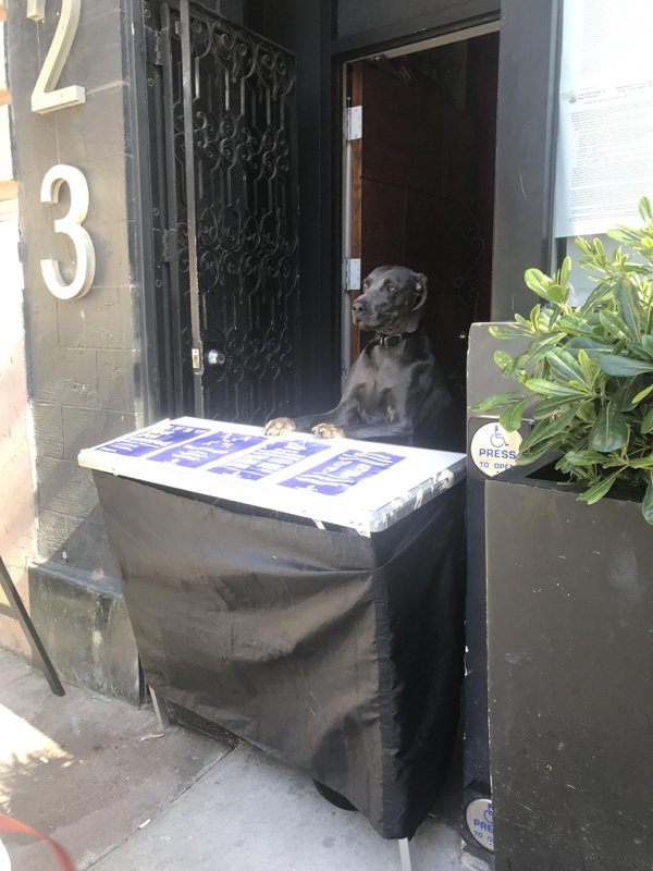Dogs And Their Jobs (29 pics)