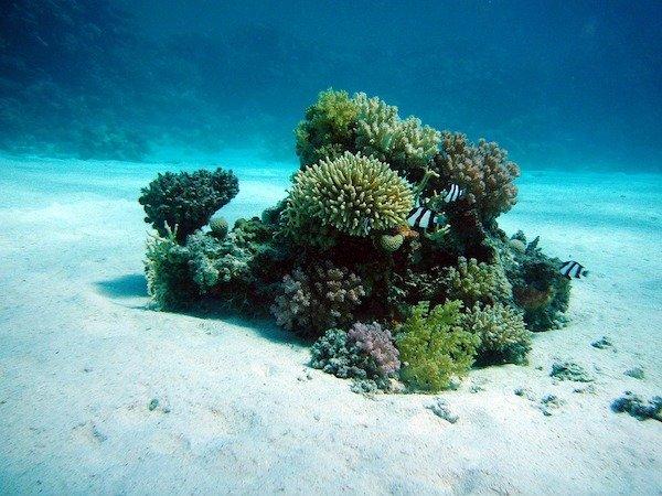 Ocean Facts (21 pics)