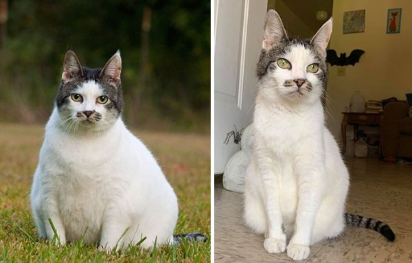 Cat Weight Loss Transformations (24 pics)