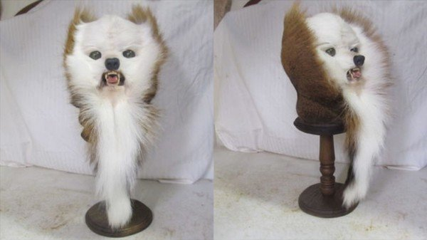 What Taxidermists Do With Deer Butts (26 pics)