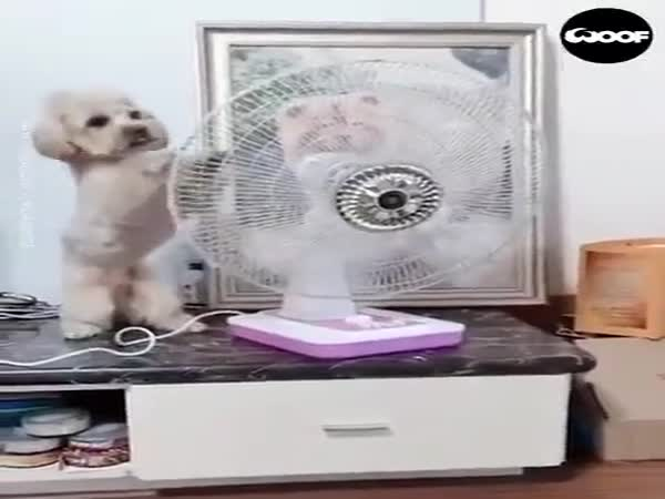 This Dog Is Really Smart