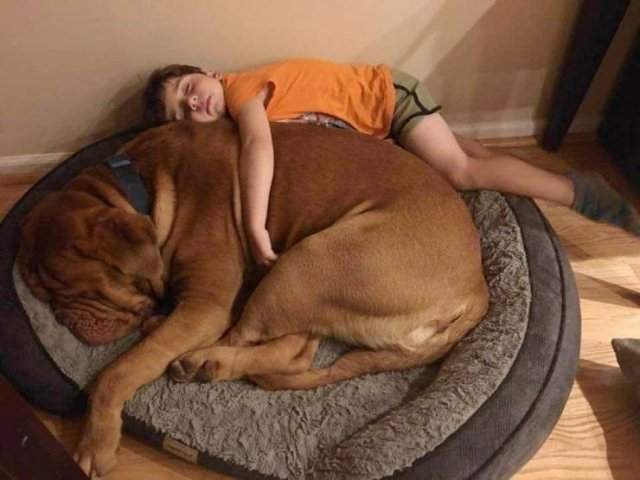 No Words Needed For These Pictures (50 pics)