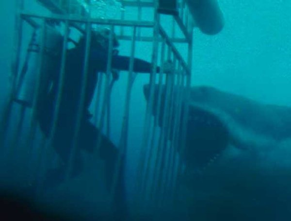 'Jaws' Facts (19 pics)