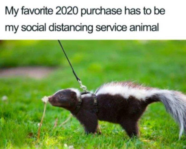 Quarantine Memes (31 pics)