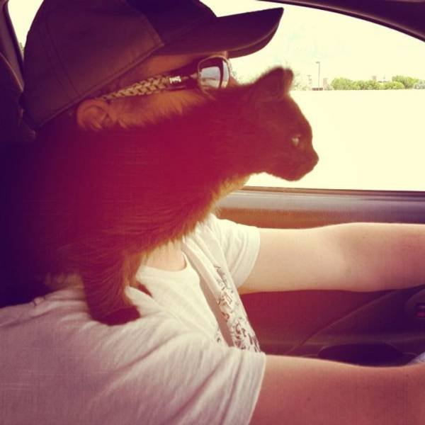 Pets With Their Owners (19 pics)
