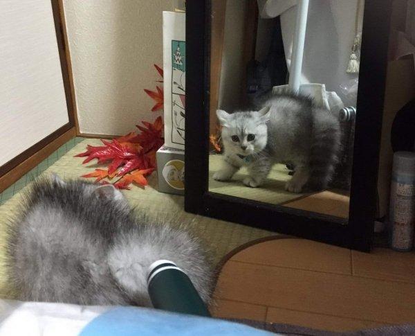 Hilarious Cats (32 pics)