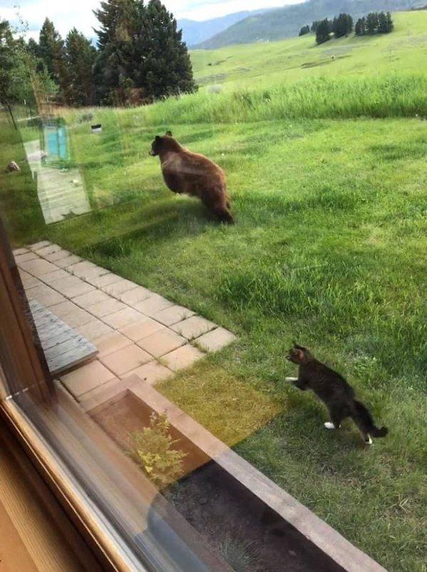 Hilarious Animals (38 pics)