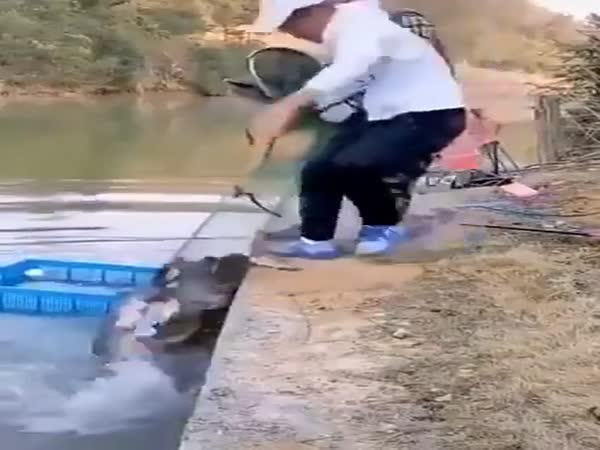 That's A Lot Of Fish