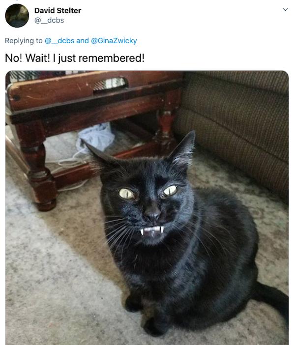 Animals: Taking Pictures Fails (28 pics)