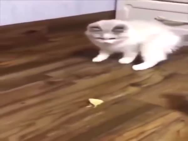 Cats Reactions To Durian Fruit