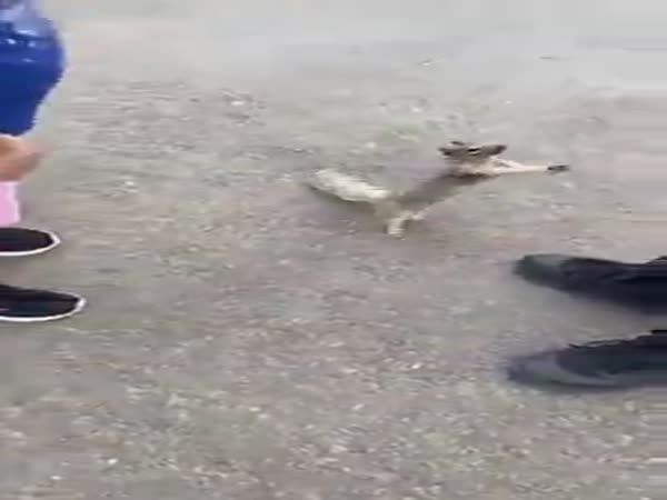 Squirrel Asking For Water