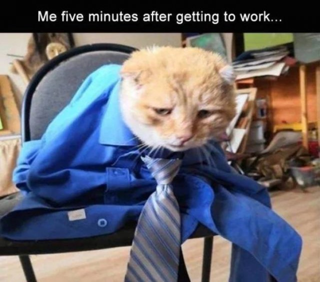 Memes And Pictures About Work (45 pics)