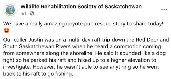 Canadian Kayaker And His Rescued Friend Coyote Pup (8 pics)