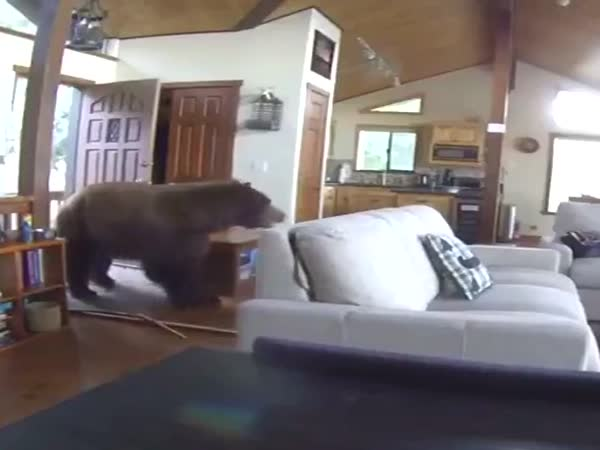 An Unexpected Guest