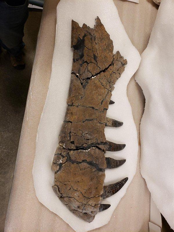 Great Fossils (19 pics)