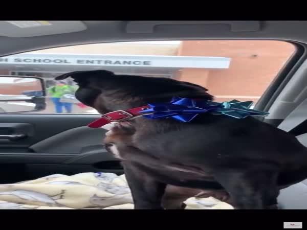 Boy Reunites With Lost Dog