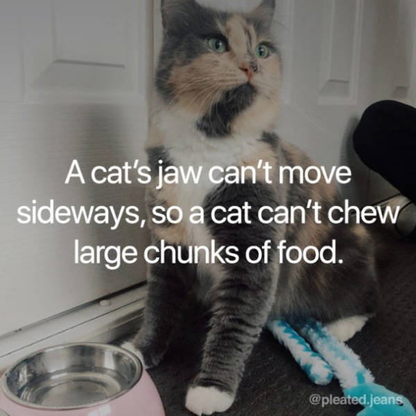 Facts About Cats (19 pics)