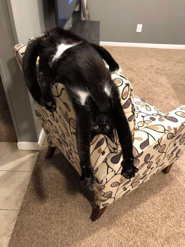 Hilarious Cats (39 pics)
