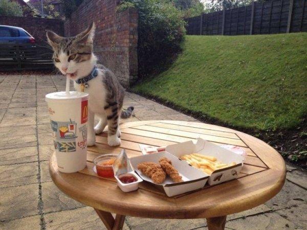 Hilarious Cats (34 pics)