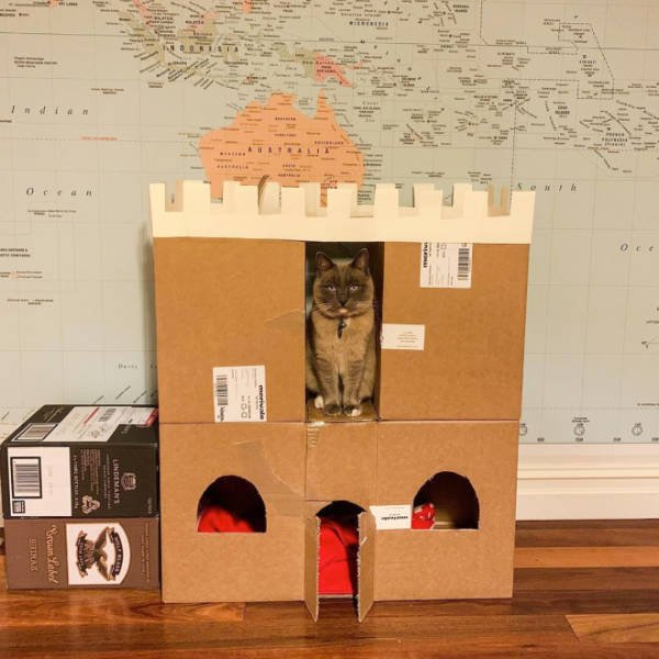 Cats In Cardboard Forts (22 pics)