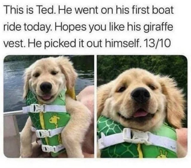 Wholesome Stories (46 pics)
