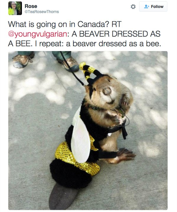 Only In Canada (20 pics)