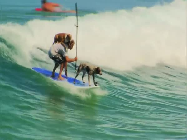 Dogs Like To Surf