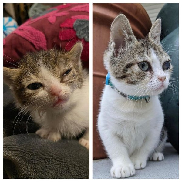 How Pets Change After Adoption (18 pics)