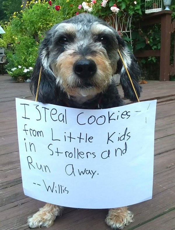 Pet Shaming (26 pics)