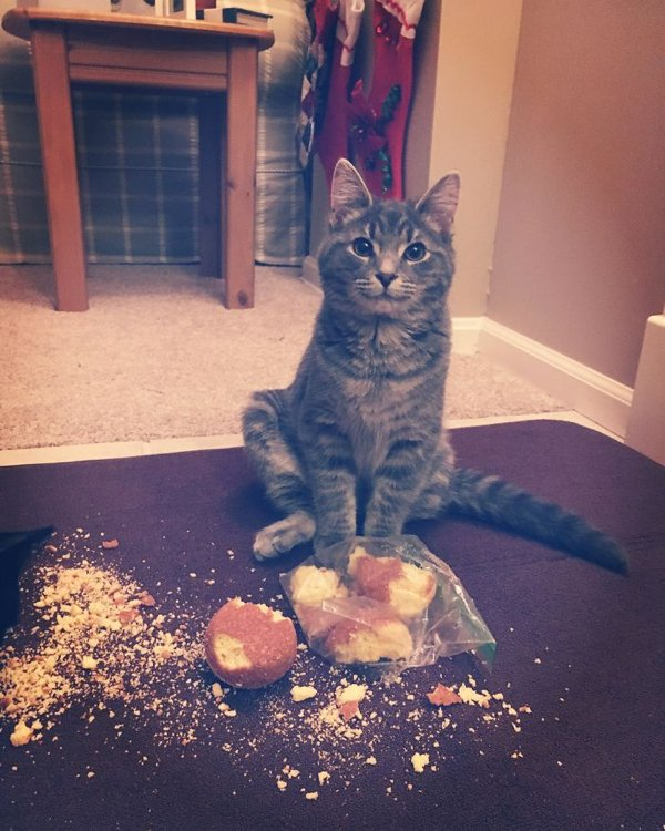 Pets Stealing Food (19 pics)