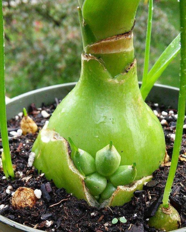 Unusual Planting (30 pics)