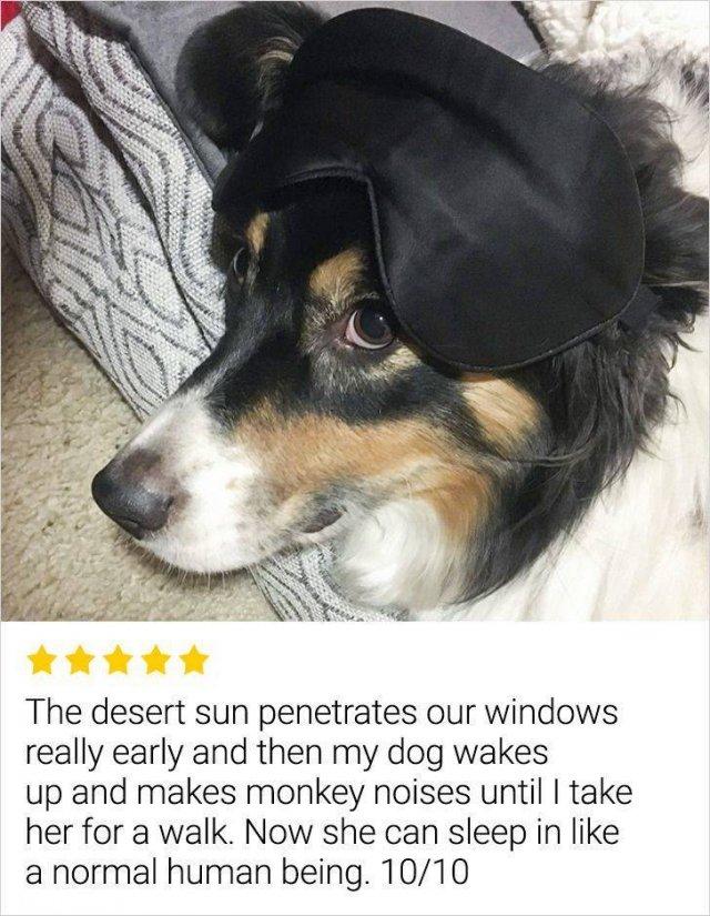 Internet Reviews (14 pics)