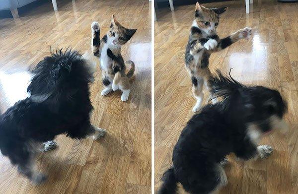 Perky Cats (42 pics)