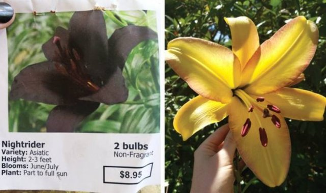 Online Shopping Went Wrong (20 pics)