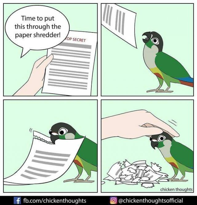 Funny Comics About Birds (30 pics)