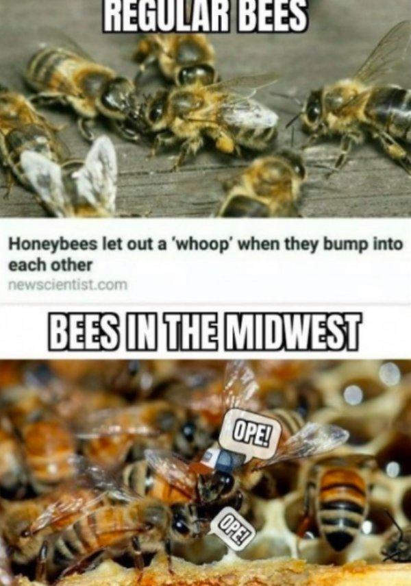 Midwest Memes (29 pics)