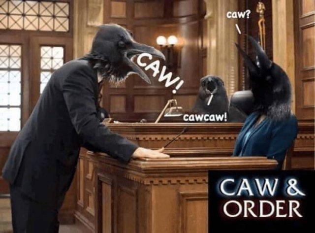 Law Memes (32 pics)