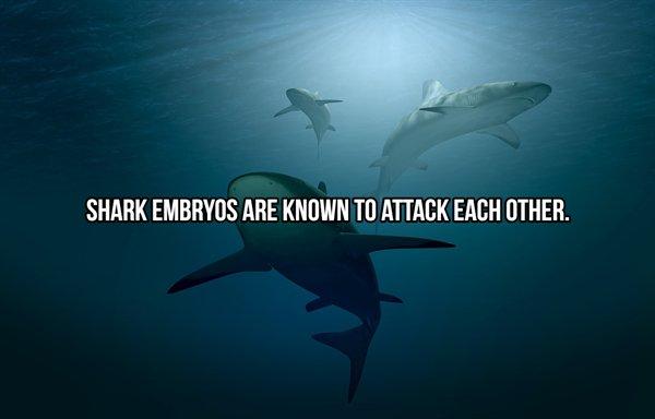 Shark Facts (24 pics)