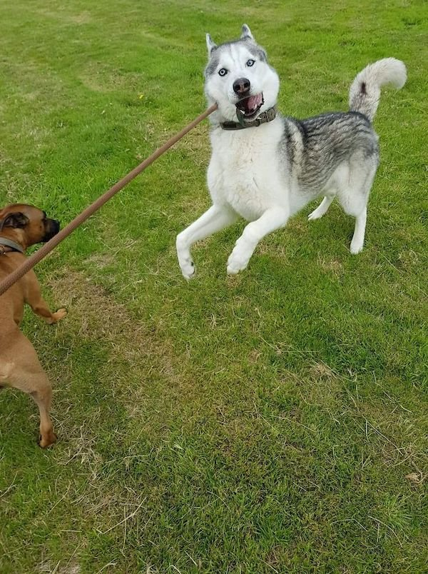 These Dogs Are Broken (31 pics)