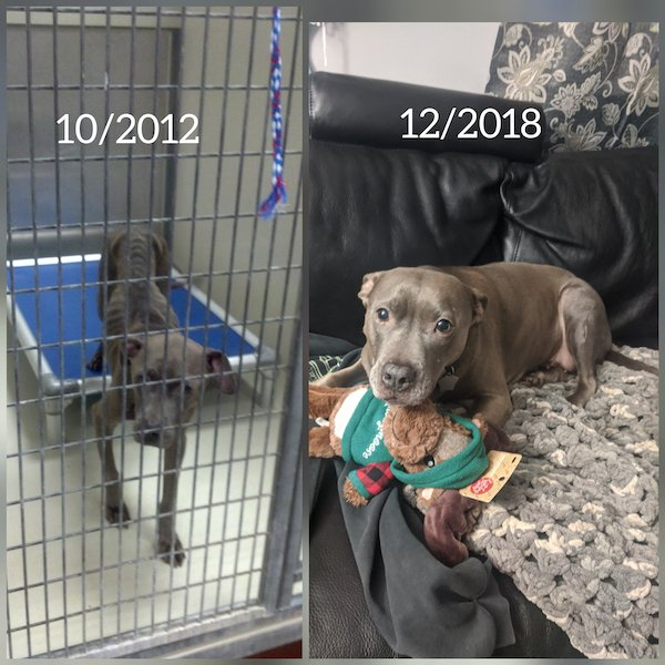 Pets Before And After Adoption (31 pics)