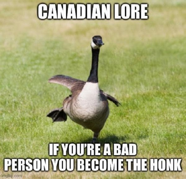 This Could Happen Only In Canada (22 pics)