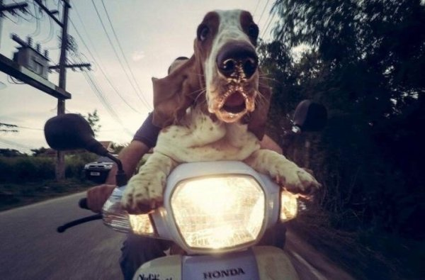 Funny Dogs (24 pics)