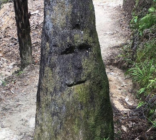 This Is Called Pareidolia (20 pics)