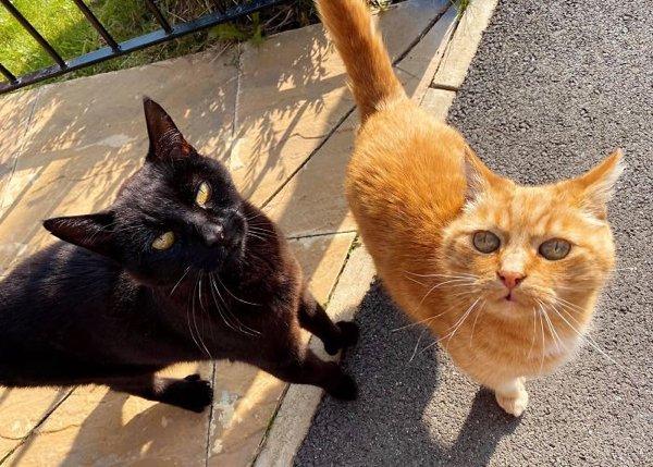 Fantastic Cats (20 pics)
