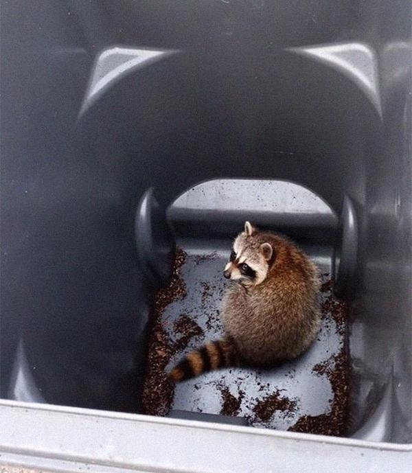 Funny Animals (30 pics)