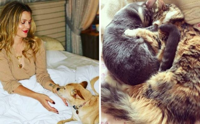 Celebrities Who Adopted Their Pets (25 pics)