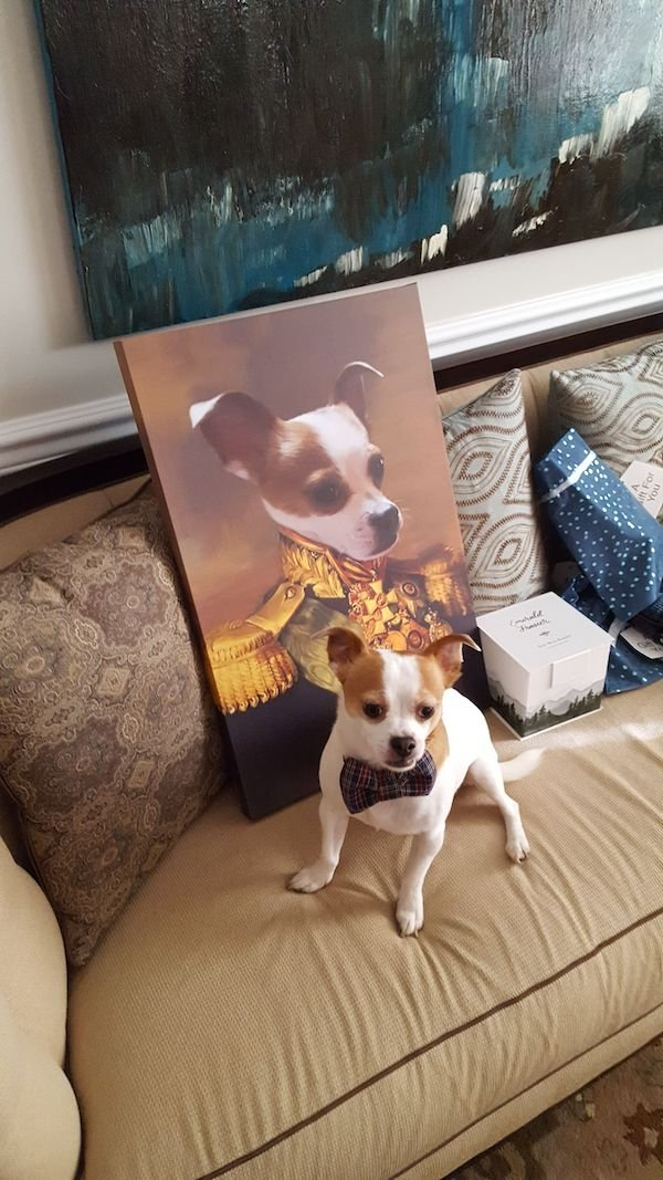 Funny Animals (42 pics)